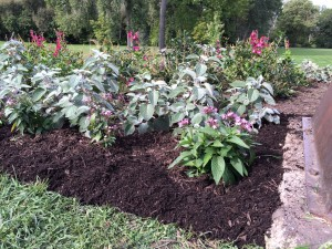 Weeded and mulched garden bed - close-up